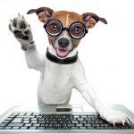High five Dog - 5 Faktoren Digitale Plattformen